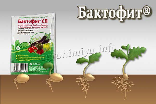 Биофунгицид Бактофит подходит для использования на любой фазе развития культур