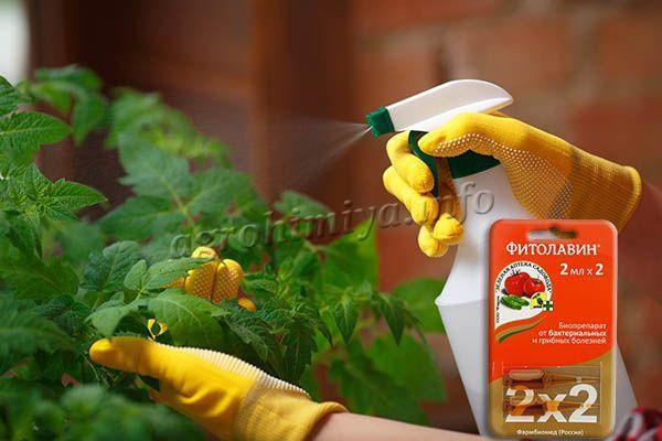 Для комнатных растений есть ампулы Фитолавина по 2 мл
