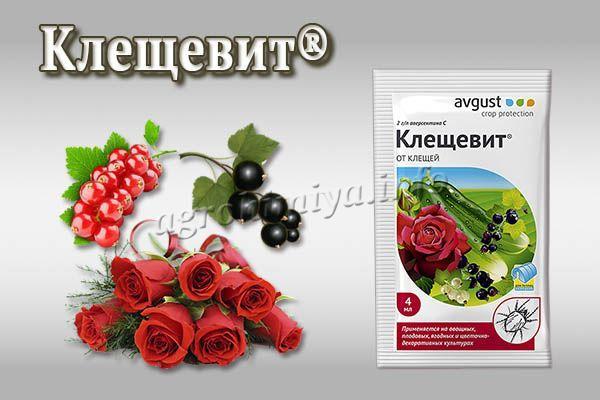 Инструкция по применению Клещевита для ягод и цветов