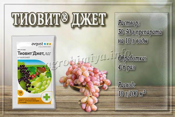 Инструкция по применению Тиовит Джета для винограда