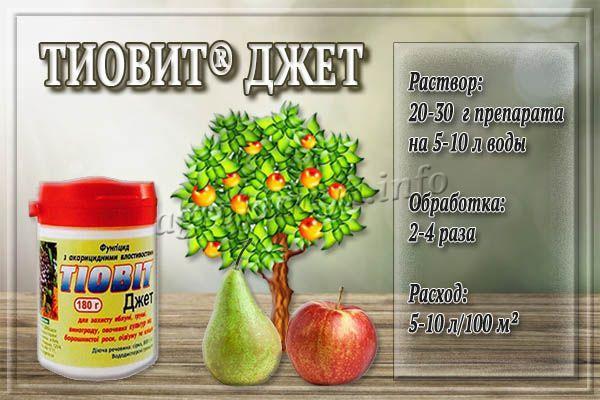 Инструкция по применению Тиовит Джета для яблонь и груш