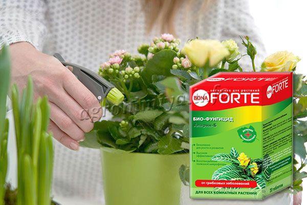 Комнатные растения также можно обрабатывать биопрепаратом Алирин-Б