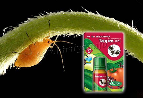 На яблонях это средство уничтожает цветоеда и тлю