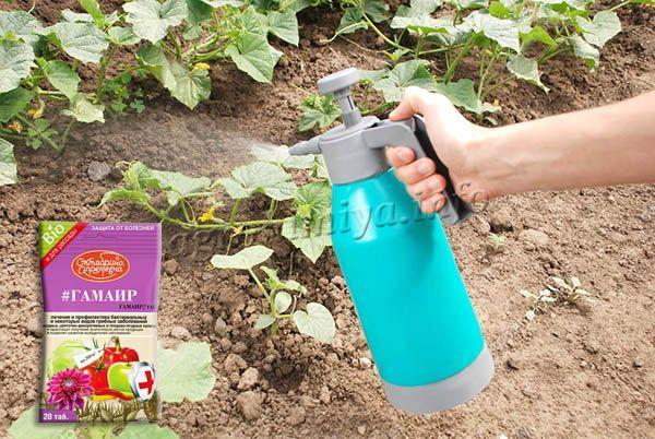 Обработка растений проводится путем орошения наземной части растения и полива прикорневой зоны
