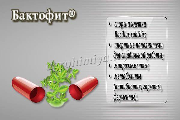 Описание биофунгицида Бактофит