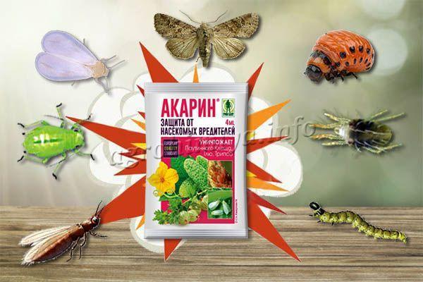 Акарин - это инсектицид кишечно-контактного действия