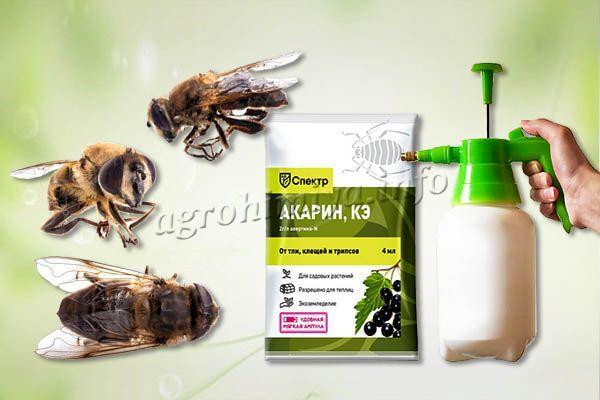 Акарин опасен для пчел