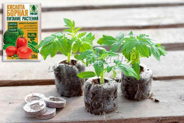 Бор укрепляет стебель и корень томатов