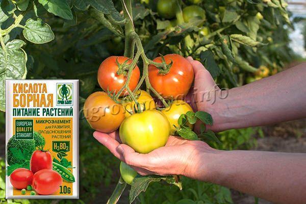 Борная кислота для томатов – это очень полезная подкормка