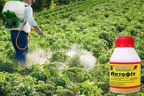 Для опрыскивания растений Актофитом рекомендуется использовать мелкодисперсное распыление