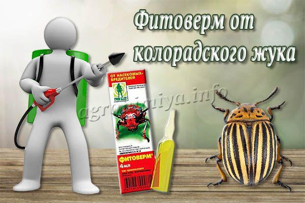 Фитоверм от колорадского жука