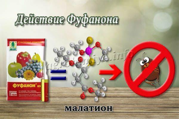 Главное действующее вещество в составе – малатион