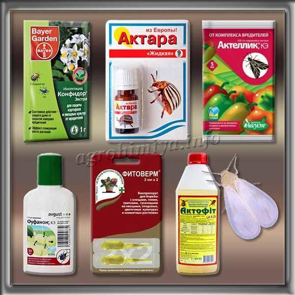 Инсектициды для борьбы с Белокрылкой