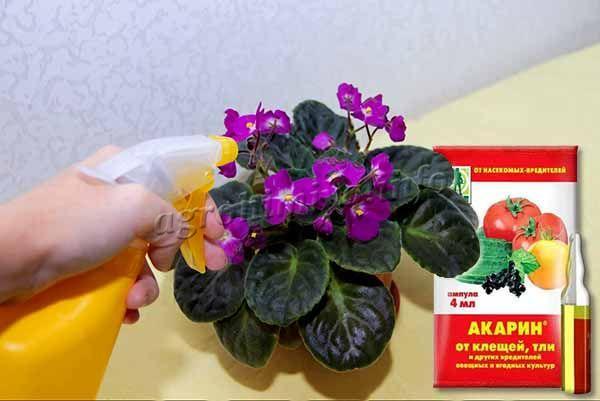 Использовать Акарин можно и для обработки комнатных растений