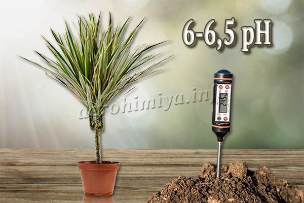 Кислотность грунта должна быть 6-6,5 pH