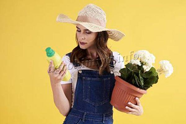 Комнатные цветы нуждаются в удобрениях не меньше, чем огородные культуры