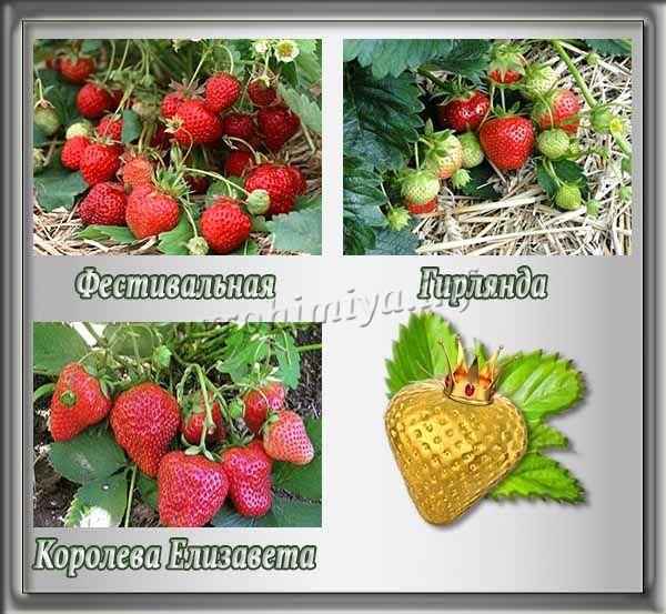 Лучшие сорта для Сибири и Урала