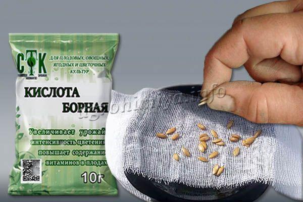 На этапе посева можно замочить семена в растворе борной кислоты