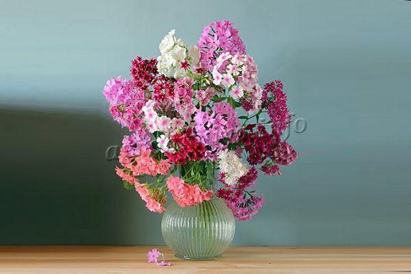 Окрас цветов может быть самым разнообразным, от белого до темно фиолетового