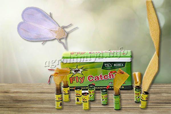 От Белокрылок в теплице можно использовать простые клеящие ленты для мух
