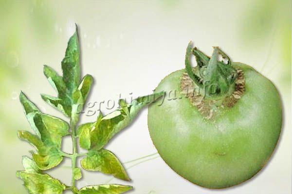 Признаки недостатка бора у томатов