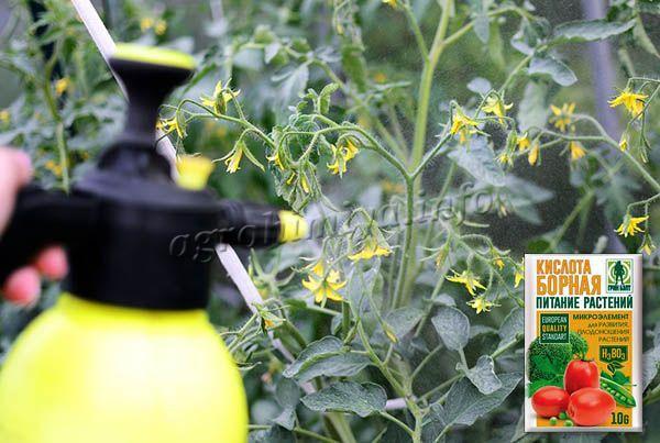 Рекомендуется распылять борную кислоту 1-3 раза при появлении бутонов на растениях