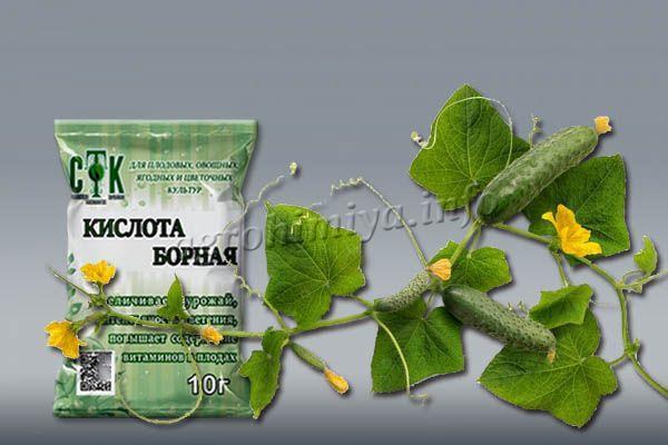 Удобрение огурцов борной кислотой во время появления цветов и плодов