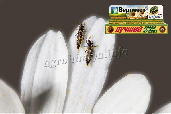 Вертимек справляется с вредителями на цветочно-декоративных растениях