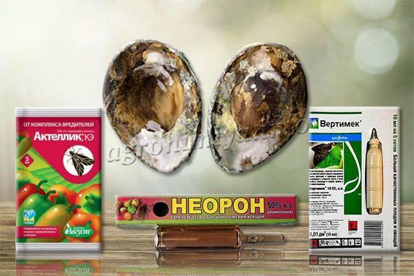Для лечения авокадо используют инсектициды