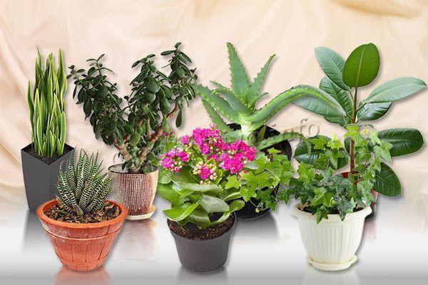 Фото комнатных растений для новичков