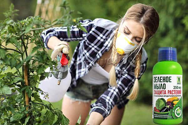 Меры предосторожности при использовании Зеленого мыла