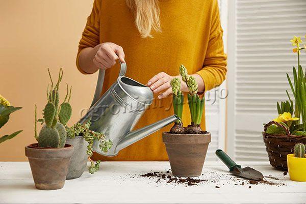 Поливы для каждого растения могут отличаться по обильности и частоте