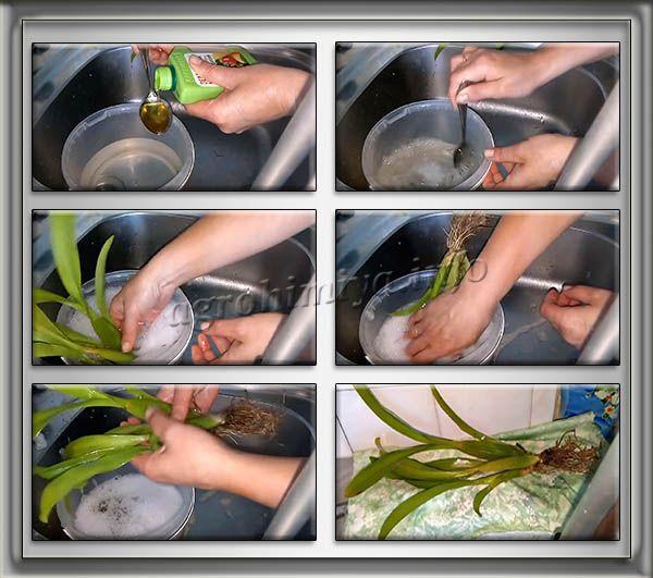 Процесс обработки комнатных растений Зеленым мылом