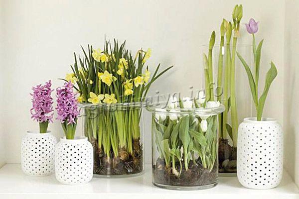 Растения выращиваемые в цветниках и в комнатных условиях