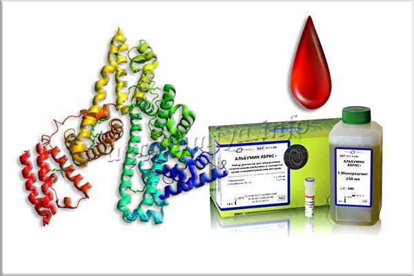 Фото молекулы альбумина в сыворотке крови