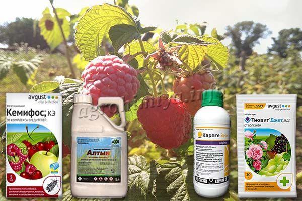 Химические препараты для обработки малины от вредителей