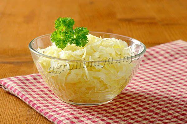 Капуста Мегатон F1 используется для засолки и квашения, так как сладковатый вкус придает готовому блюду восхитительный привкус