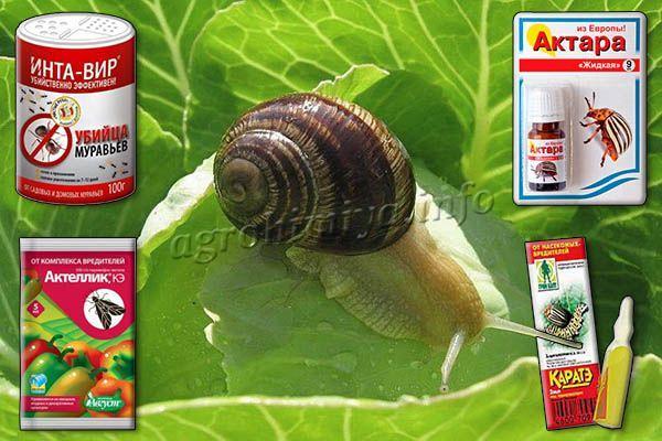 От вредителей капусты можно использовать инсектициды