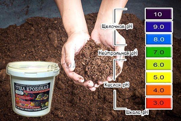 Перед тем как применять кровяную муку для растений, необходимо определить уровень pH грунта