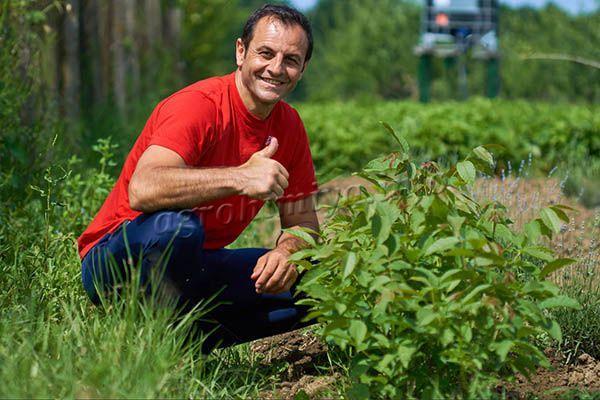 Пересаживать грецкий орех на огород проще всего, когда ему будет 1-2 года