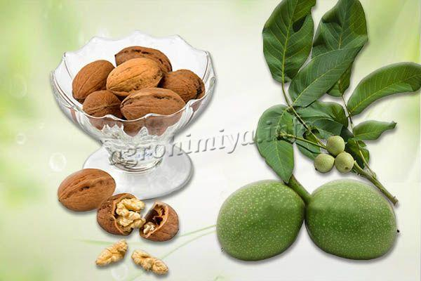 Плоды берутся крупные, без повреждений, такие, чтобы ядро без проблем вынималось из скорлупы