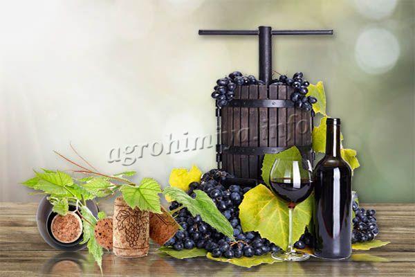 Рецепт вина из Изабеллы такой же, как и из любого другого вина