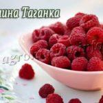 Сорт малины Таганка