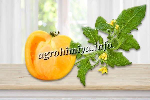 Соцветия простые, форма плодов округлая или сердцевидная