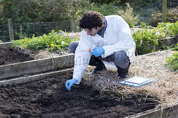 Уровень pH (кислотности) почвы определяется в лаборатории или посредством специальных тестеров