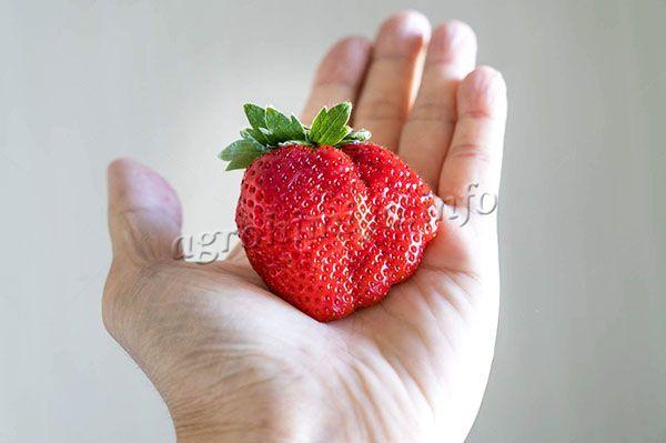 Вес ягодки в среднем 28-34 г