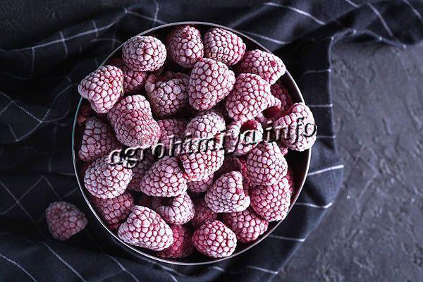Ягоды малины Таганка можно класть в десерты, выпечку, морозить и сушить