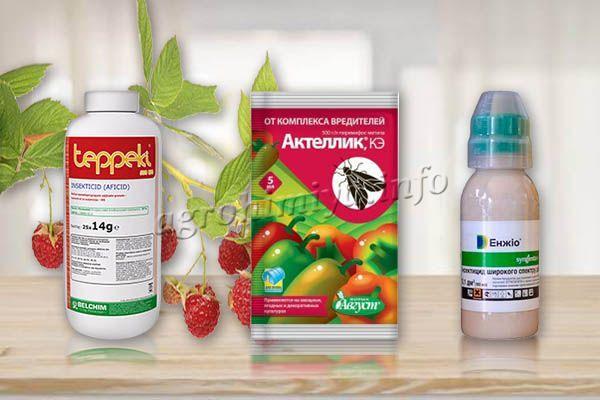 Чтобы избавиться от вредителей, можно использовать проверенные инсектициды