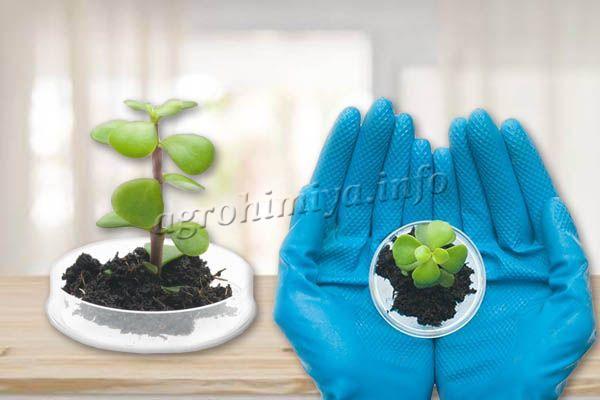 Для определения плодородие почвы нужно снять образцы земли и изучить их в лаборатории