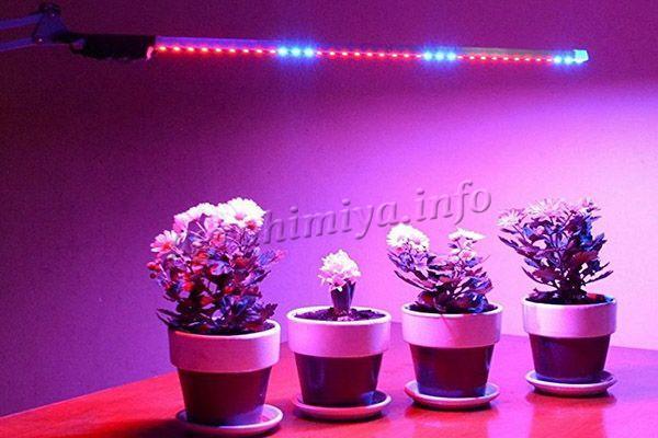 Для растений они действительно намного полезней простого бытового освещения
